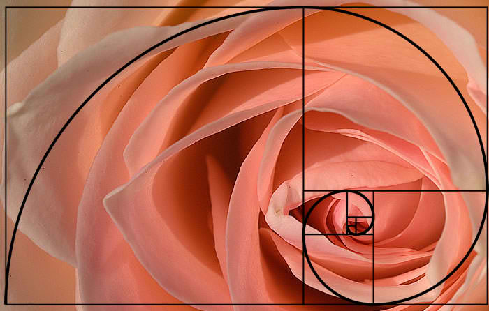 fibonacci sequence in nature The fibonacci sequence appears in the smallest, to the largest objects in nature  it is a way for information to flow in a very efficient manner.