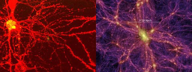 Manuel Lima: Una historia visual del conocimiento humano. Foto: El cerebro y al lado derecho el universo.