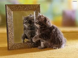 """La gente inventa las palabras. Un gato no dice: """"Yo soy un gato."""" La gente dice, """"Esto es un gato."""""""